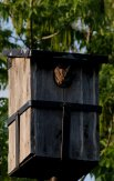 Little Owl II
