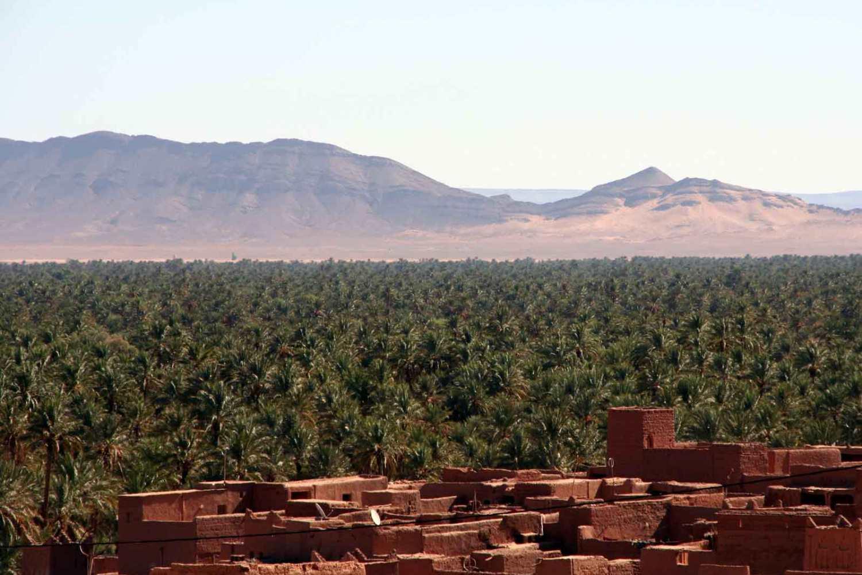 oasis zagora palme