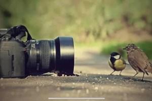 TURISMO. Ruta fotográfica de naturaleza a Morón. 16 de mayo @ Morón de la Frontera