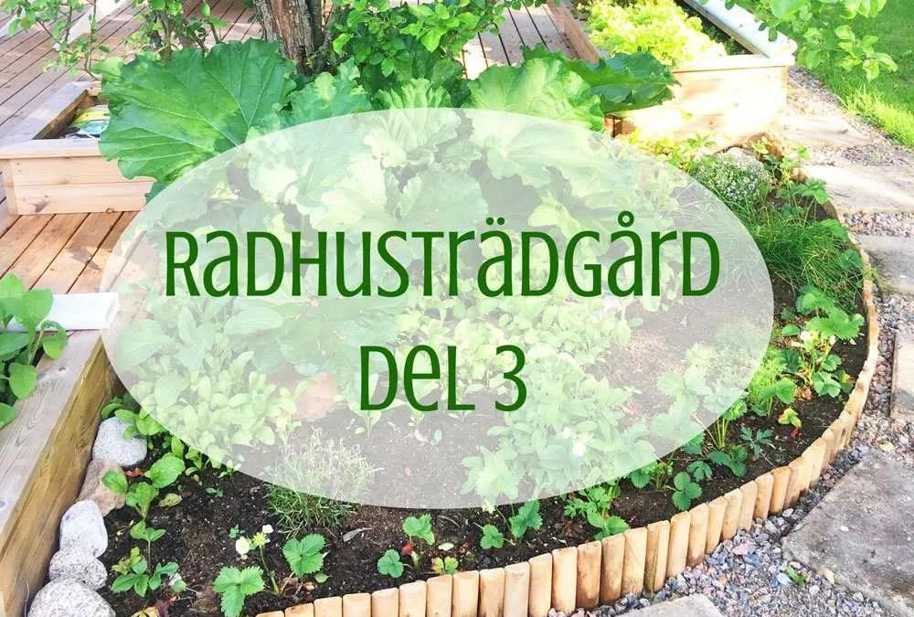Radhusträdgård del 3 – Den första skörden