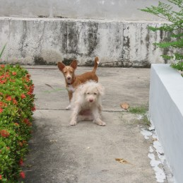 Two little companions at Protestant Cemetery, Bangkok
