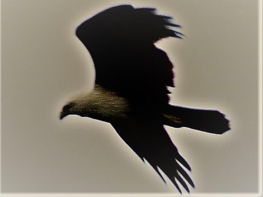 Birds in Sri Lanka
