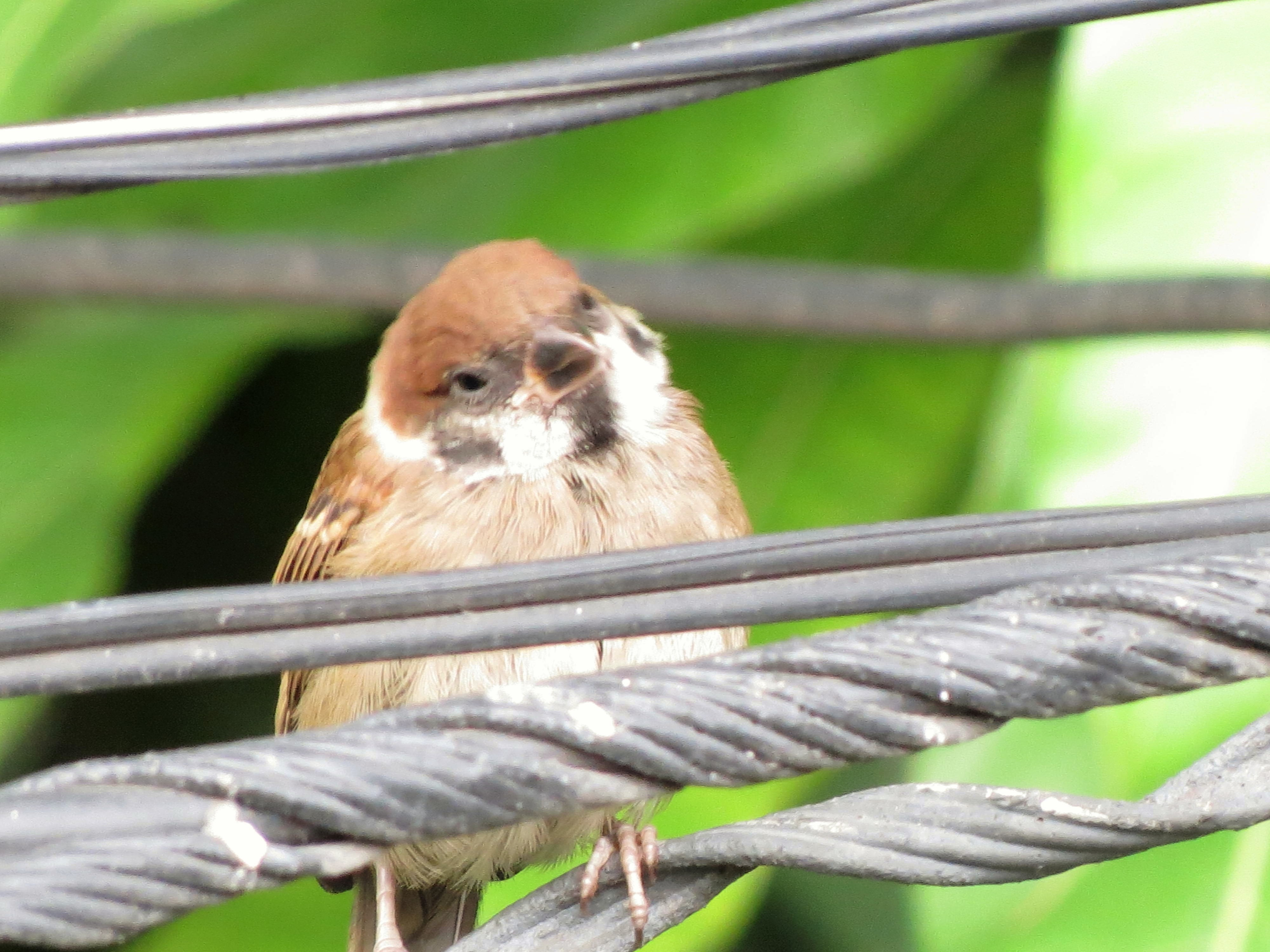 Birds in Bangkok