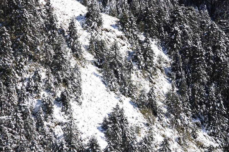 合歡山冬雪前奏曲 (89)