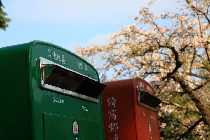 2010阿里山櫻花季