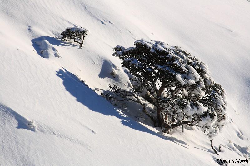 合歡山冬雪終曲 (33)