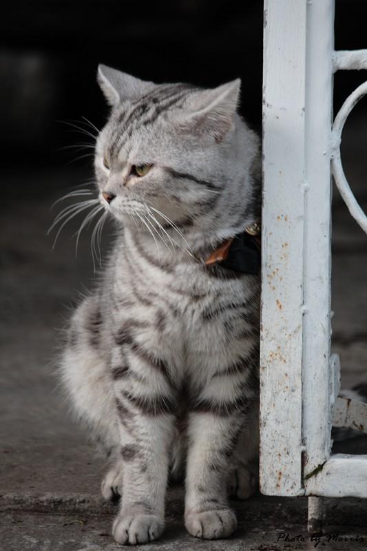 六號貓洞 (14)