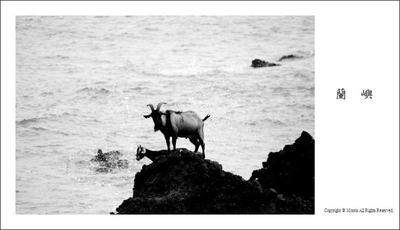 山羊的國度 (34)