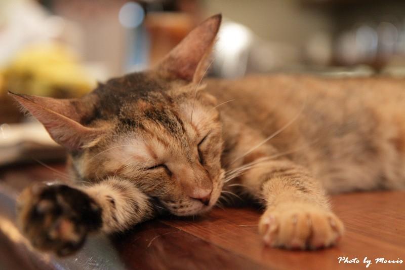 貓物語‧極簡咖啡 (04)