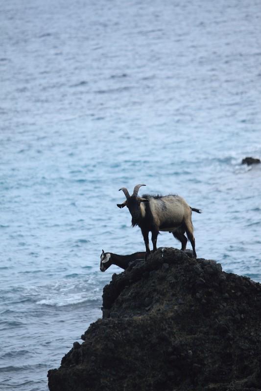 山羊的國度 (35)