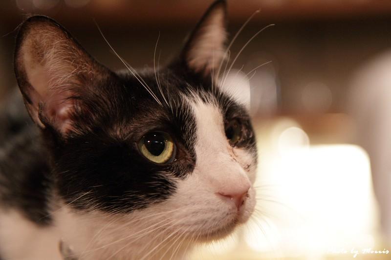 貓物語‧極簡咖啡 (47)
