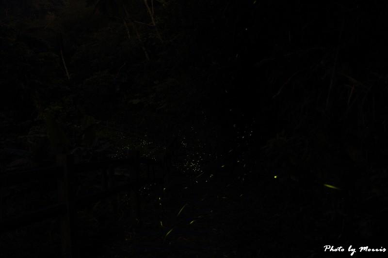 螢光晚會 (3)