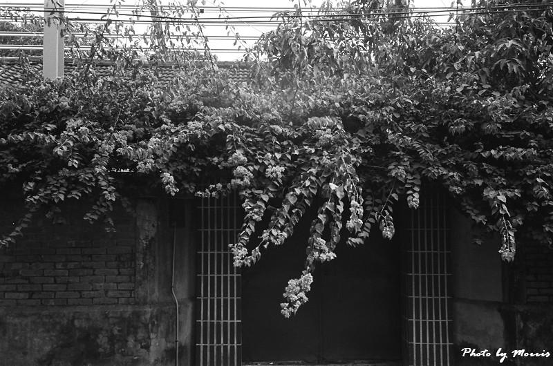 嘉義小旅行 II (09)