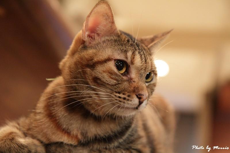 貓物語‧極簡咖啡 (35)