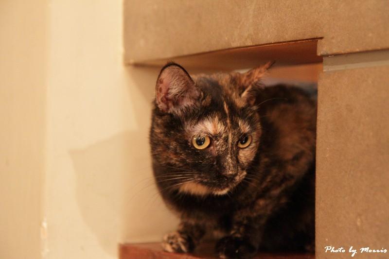 貓物語‧極簡咖啡 (44)