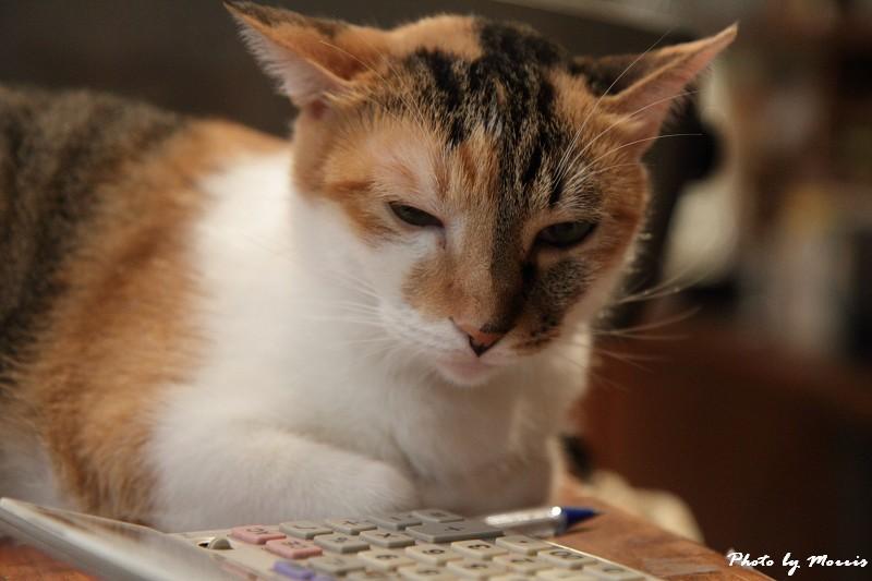 貓物語‧極簡咖啡 (15)
