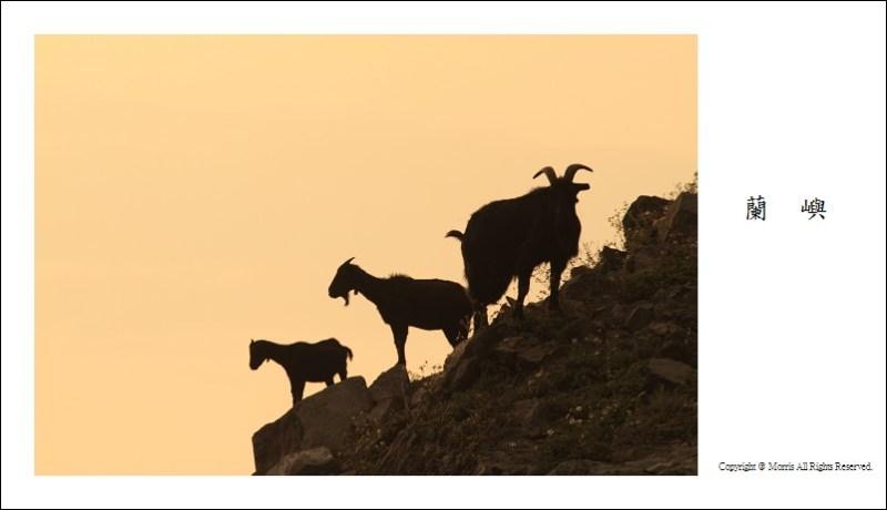 山羊的國度 (21)
