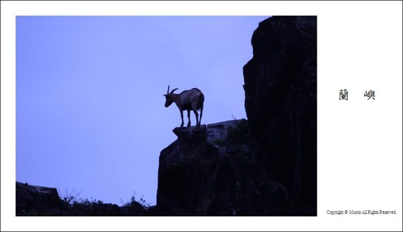 山羊的國度 (25)