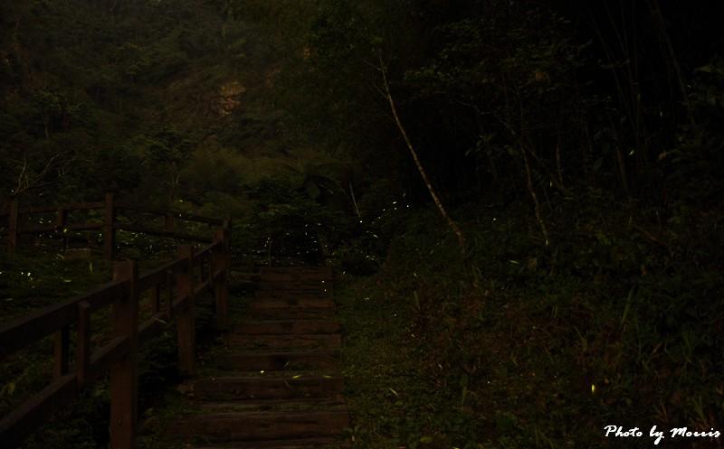 螢光晚會 (2)