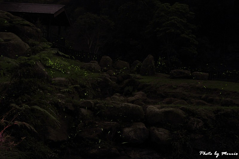 螢光晚會 (10)