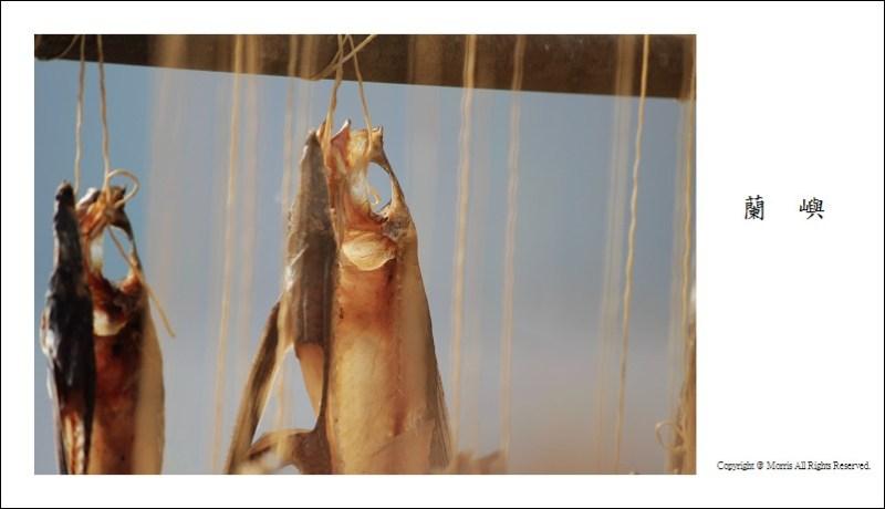 飛魚季 (33)