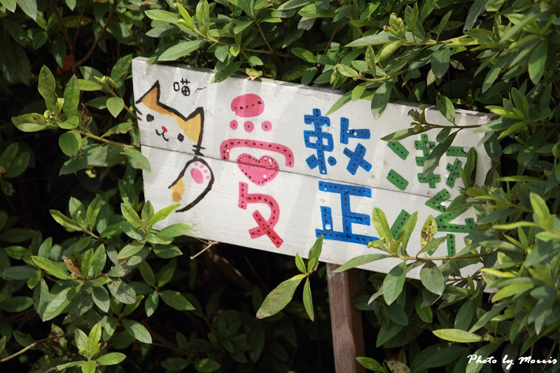散步猴硐貓村 (07)