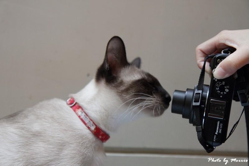 貓物語‧極簡咖啡 (17)