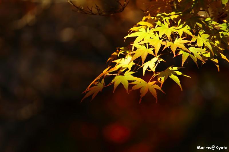 東福寺 (49)