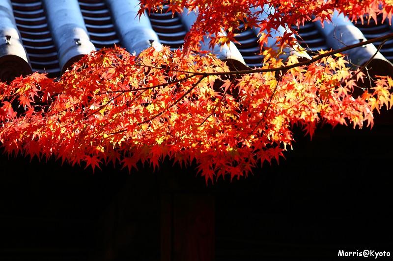 東福寺 (50)