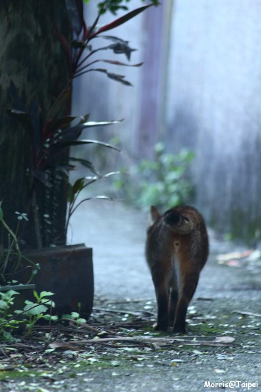 再訪猴硐貓村 (1)