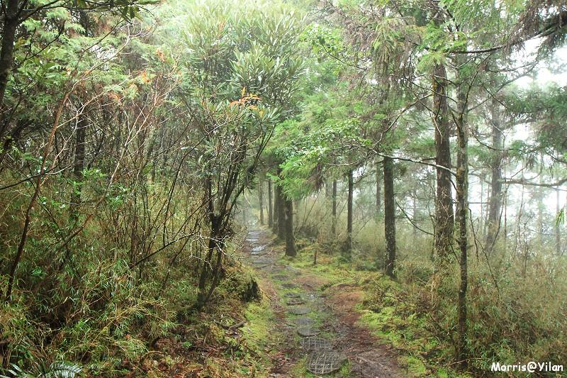 翠峰湖環山步道 (39)