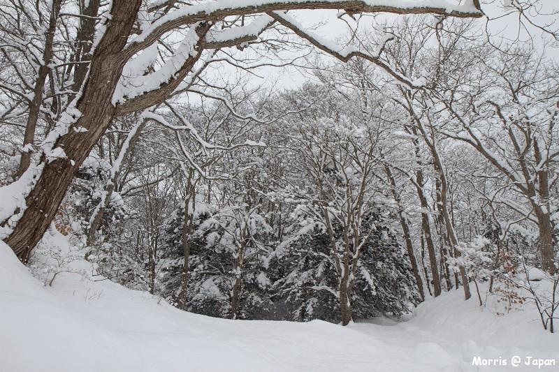 大沼公園 (37)