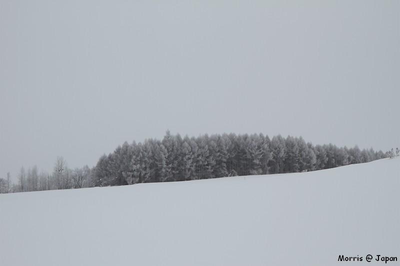 美瑛之冬一 (84)