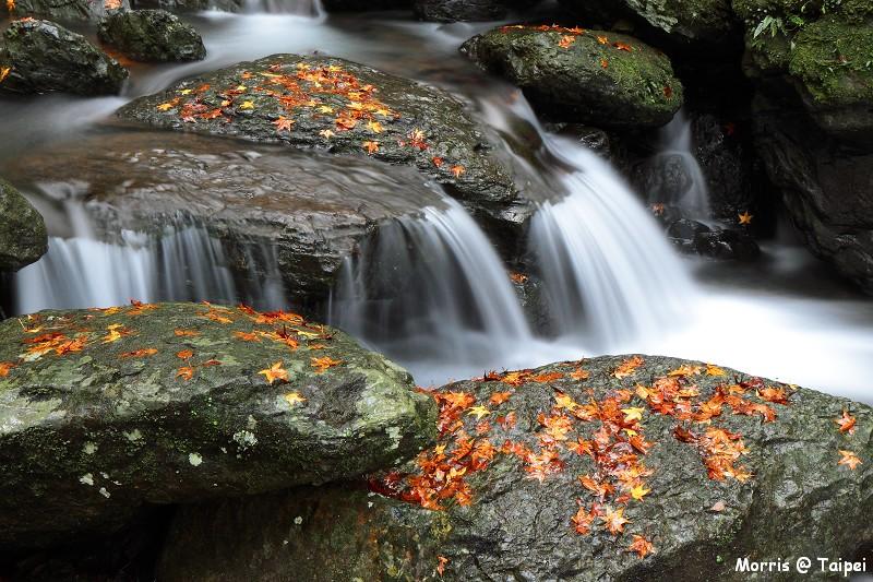 雲森瀑布 楓紅楓落 (7)