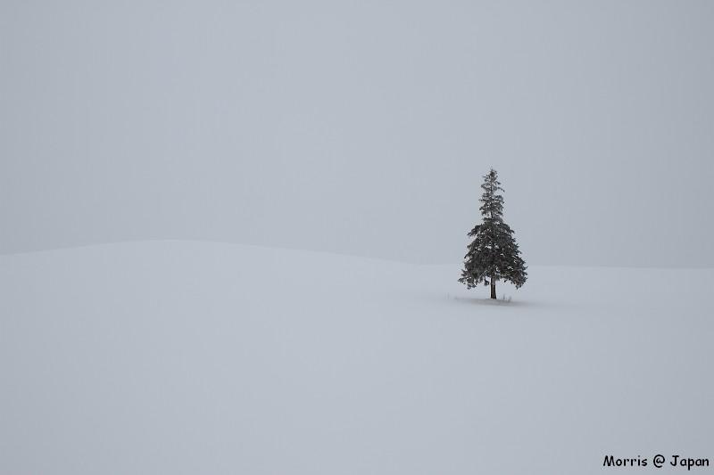 美瑛之冬一 (87)