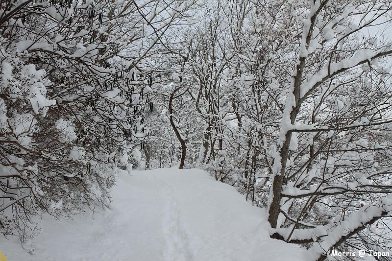 大沼公園 (28)