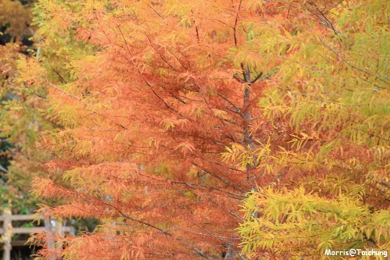 2011 武陵農場 (28)