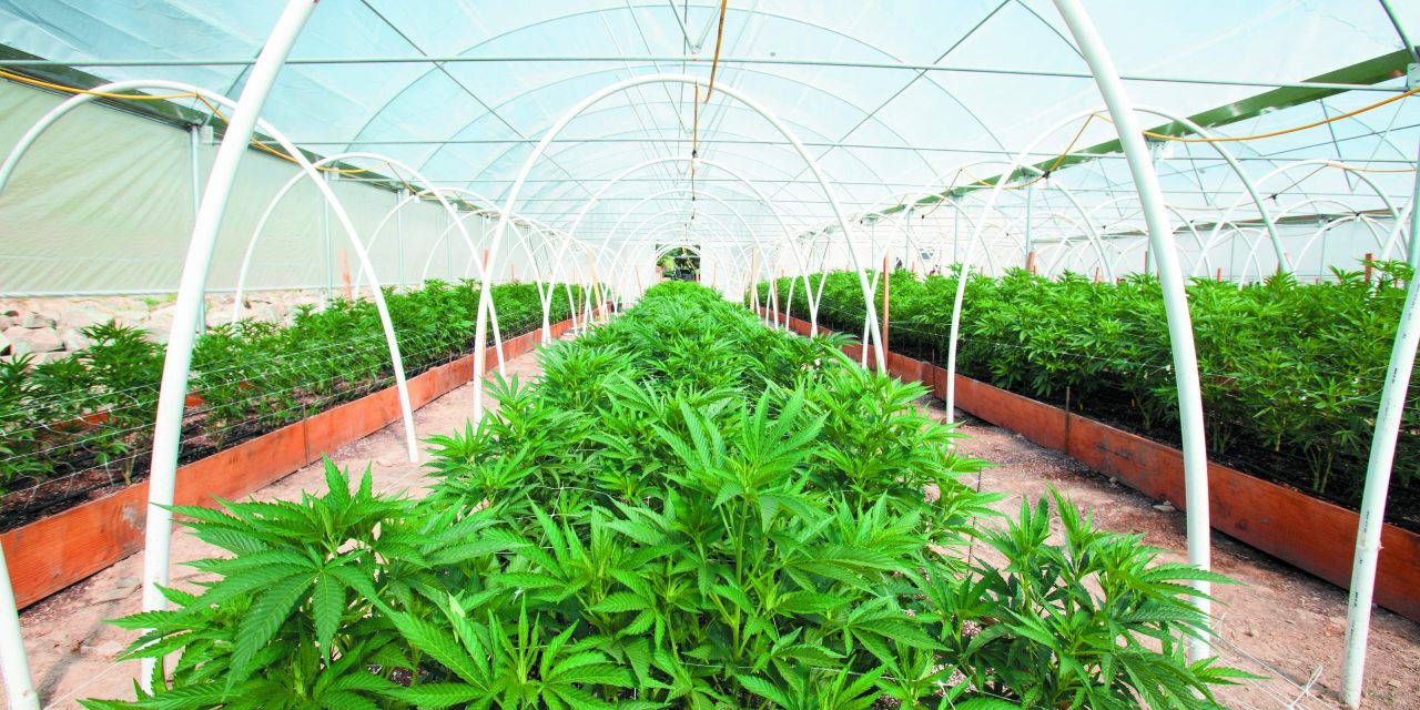 Supervisors Approve Holding Cannabis Tax Rate