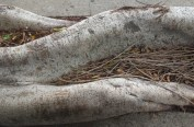 Splendid roots
