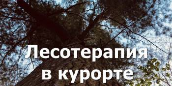Forest therapy in Morshyn. Forest treatment