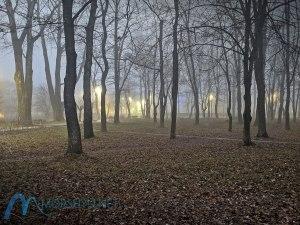 туман в парке Моршина