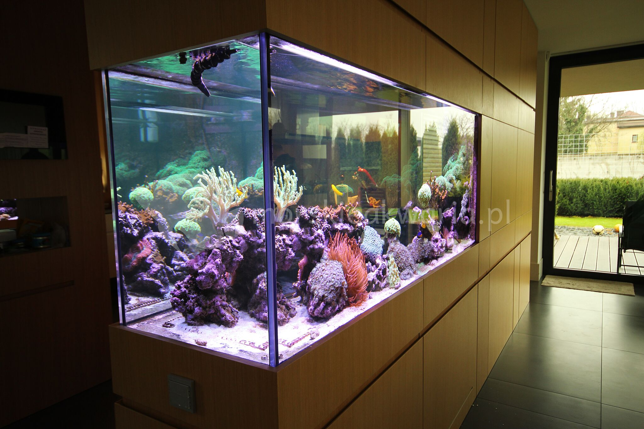 Galeria Morskie Akwaria