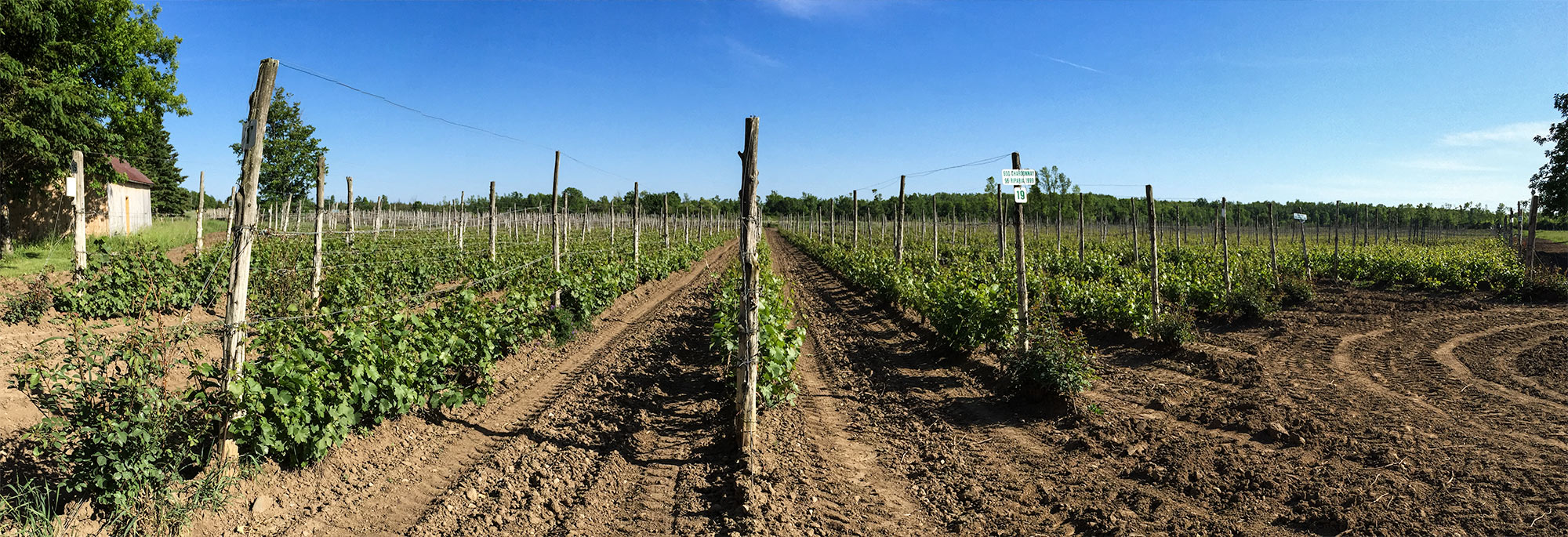 Long Dog winery in Prince Edward County.