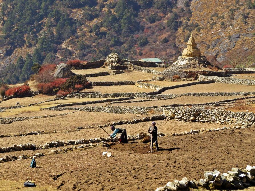 Bauern in Phortse, Himalaja