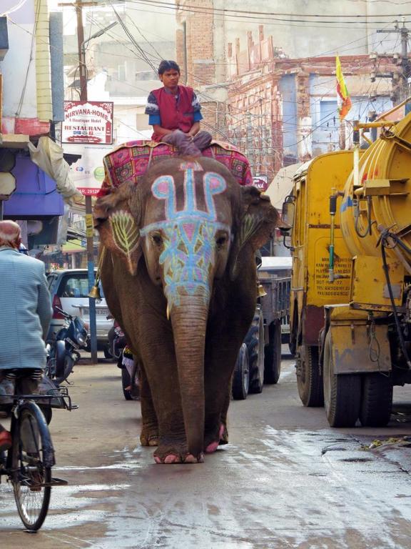 Elefant in der Großstadt, Indien