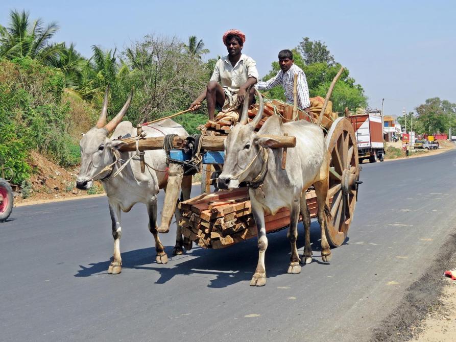 Ochsenkarren in Indien