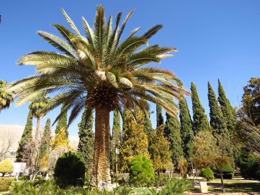 Palme und Zypressen im Eram-Garten in Schiras