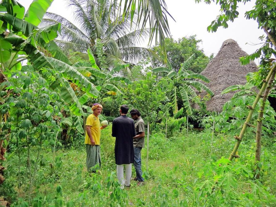 Permakultur ist Gartenrevolution, Auroville, Solitude Farm