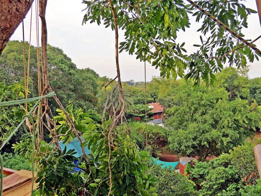 Auroville liegt in einem dichten, trockenen Tropenwald
