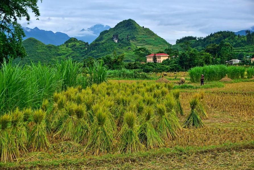 abgeerntete Felder in den Bergen von Vietnam